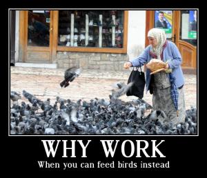 whyworkfeedbirds